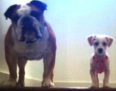dog-siblings